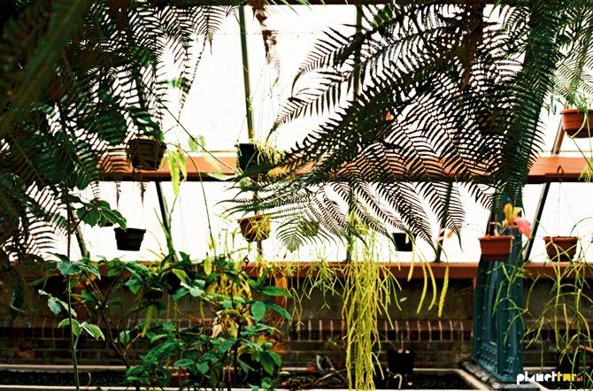 Vintage botanic gardens - Planet Fur