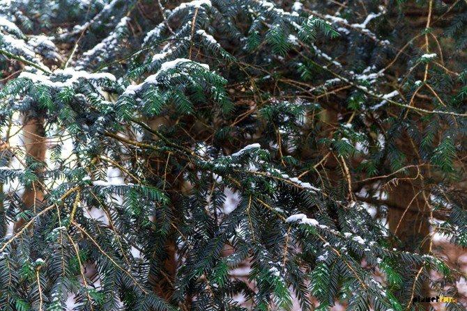 Moominland Midwinter - Planet Fur